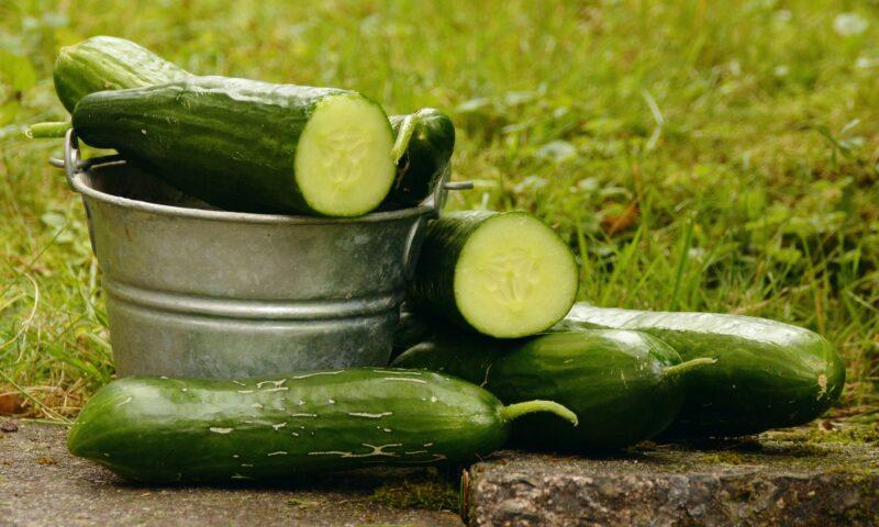 Propiedades del pepino y sus beneficios