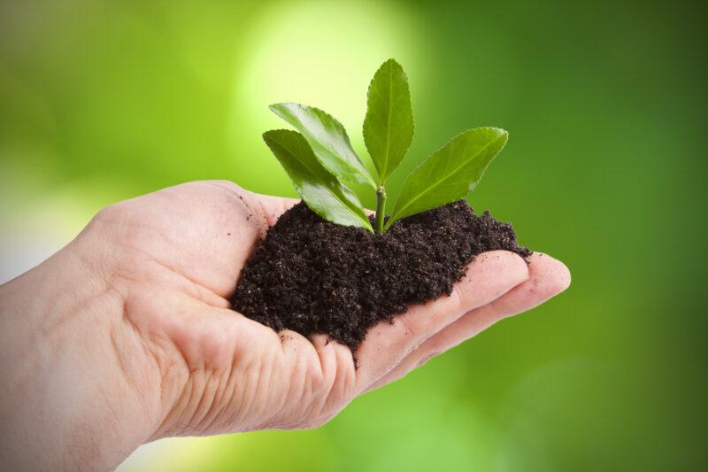 Agricultura sostenible gracias a importación y exportación de frutas