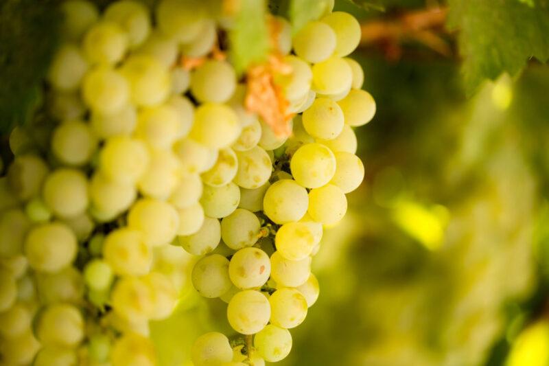 Propiedades de la uva, la fruta reina en Navidad