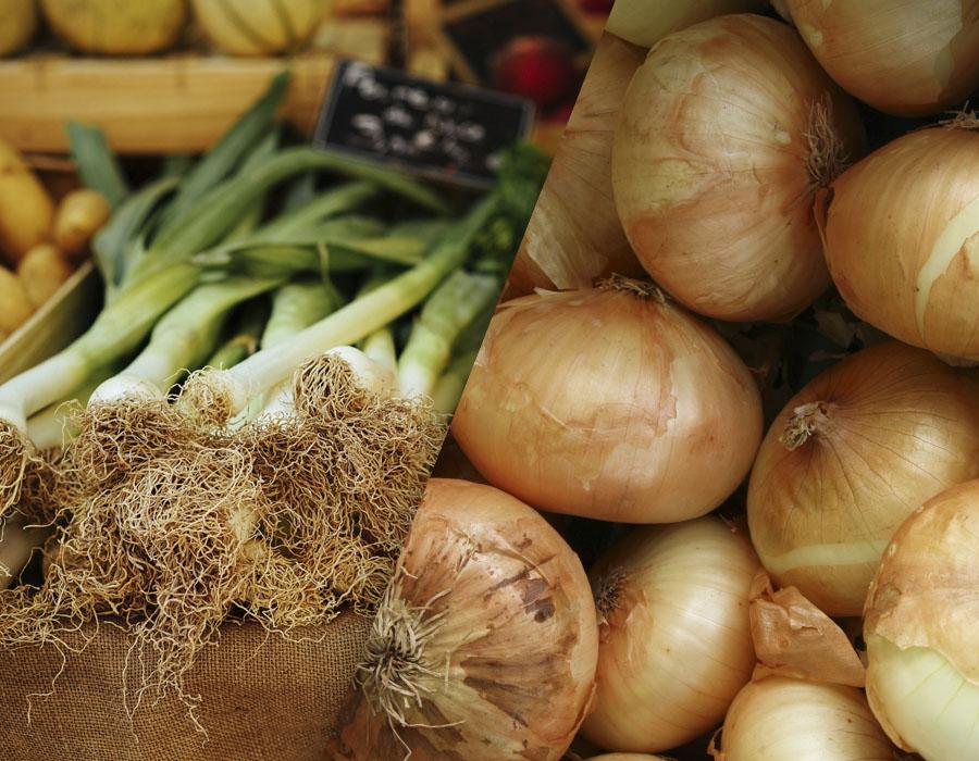 imagen destacada del post sobre las diferencias entre cebolleta y cebolla