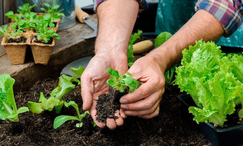 ¿Qué hortalizas elegir para tu huerto urbano?