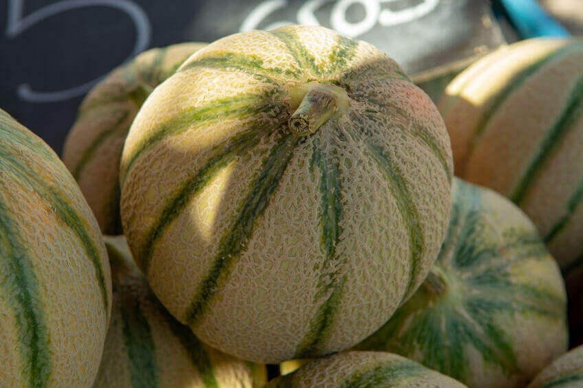 tipo de melón charentasis