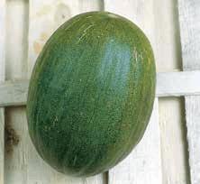 tipo de melón rochet