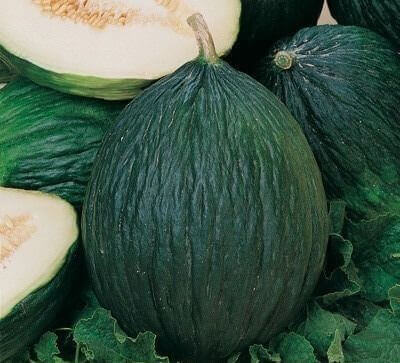 tipo de melón trendal