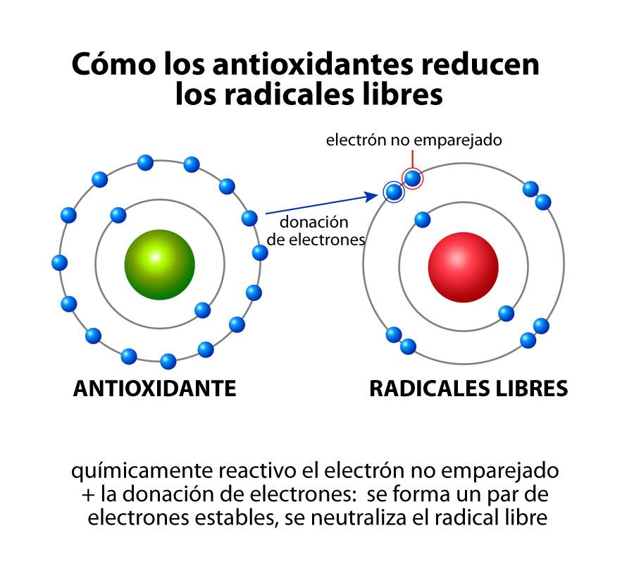 cómo actúan los radicales libres y los antioxidantes
