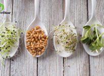 ¿Qué son los germinados? Tipos y beneficios